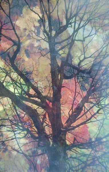 AutumnCollage_ Heidi_Sussman